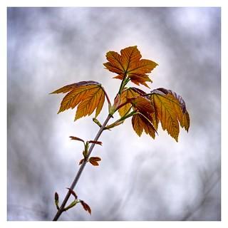 'Spring Into Leaf'