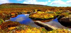 Mountain ROCK POOLS (Lani Elliott) Tags: lanielliott lani elliottlani nature naturephotography rockpools mountain vegetation water pools mountwellington kunanyi scene view scenictasmania australia tasmania landscape