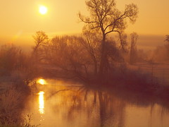 WINTERSUNRISE BY THE RIVER P2193514 (hans 1960) Tags: winter nature natur outdoor fluss river wasser water trees bäume mirrow spiegelung home heimat stille stillness harmony ruhe landschaft landscape golden licht light sun sunrise sonne sol soleil atardecer germany