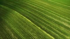Zengin (ahmetaliagır) Tags: djitürkiye djiglobal dji down looking phantom crops harvest farming lookdown rural agriculture crop food aerial plant natural field turkey tekirdag hayrabolu green farmland wheat farm