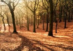 Tandle Hills (Y.Dingo) Tags: autumnal tandlehills trees mist