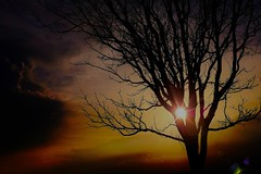 Morning Storm (Tim @ Photovisions) Tags: nebraska beatrice storm clouds tree sun sunset sunrise sky