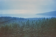 Lost Signals, Applecross 2016 (Sly Panda) Tags: sly panda 35mm colour analog film trees evergreen applecross scotland wild coast mist rainy day bad weather foggy canon sureshot a1 iso1600 grain misty mystery grainisgood