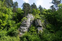 DSC_2613 (oria77) Tags: dolina bolechowicka krakow valley woodland poland
