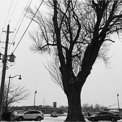 #deadtrees #trippy #art #artistic #artsy #creative #creativity #daring #different #blackandwhite #photography (muchlove2016) Tags: deadtrees trippy art artistic artsy creative creativity daring different blackandwhite photography
