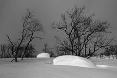DSC4027 (Tanel Kindsigo) Tags: winter sky snow white lapland daylight trees rocks contrast