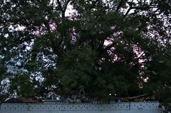 Sri Dalada Maligawa-Kandy (Carlo Di Campli) Tags: nikond7000 alberi temple trees sunset tramonto travel buddhism srylanka