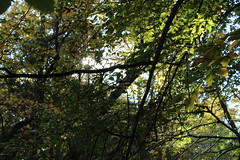 (SamGallagher) Tags: serene peace beauty bokeh sunlight park sun leaves trees nature outside views newjersey nj
