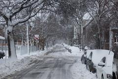 Cambridgeport Winter (imartin92) Tags: cambridge cambridgeport massachusetts winter storm street snow