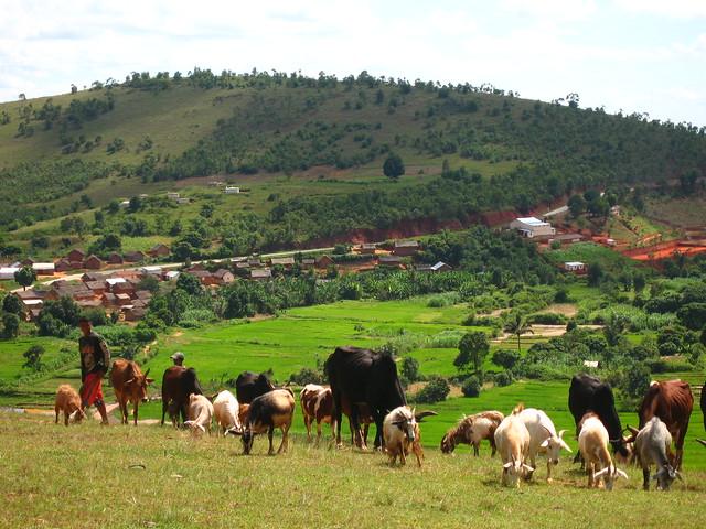 Madagascar2010 - 39