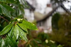playing with manual lens DOF_ (grahamrobb888) Tags: nikon nikond800 3570mm nikkor garden gardenbokeh dof