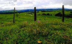Bucolic landscape (mara.arantes) Tags: landscape flowers green cattle sky tree pasture nature naturaleza natural farm flickr digital paisagem