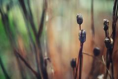the core (christian mu) Tags: flowers nature bokeh winter münster muenster botanicalgarden botanischergarten germany christianmu sonya7ii sony planar planar5014 5014 50mm zeiss schlossgarten