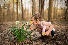 106  365 (trois petits oiseaux) Tags: 365 kids childhood family flower daffodil smell spring nature