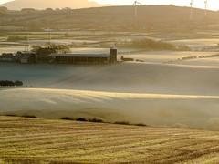 misty_morning_dogwalk_0830-4 (allybeag) Tags: crosby fields morning light mist rays crepuscular inversion misty rising trees shadows golden artyfarty