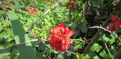 IMG_7116_Fotor01 (Ela's Zeichnungen und Fotografie) Tags: hannover landschaft natur blumen pflanzen sonnenlicht schatten äste