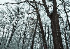 """Spring"" in Ohio (chrishowardphotography.com) Tags: springinohio winterinohio winterscene"