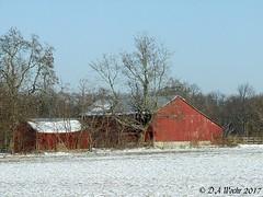 Chilling (Picsnapper1212) Tags: red white snow scene greenecounty ohio rural farm agriculture winter blue sky trees barn