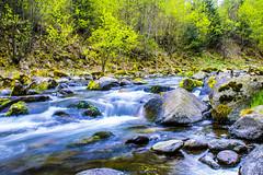 THE MAN river (Râu Bărbat) (Don Costello) Tags: rau riu water padure nature hunedoara retezat romania nikon d3300