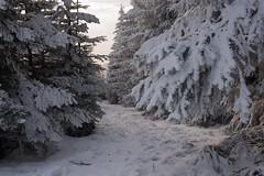 Kahler Asten (meine.augenblicke) Tags: reise conifer deutschland nordrheinwestfalen winter wege menschen nadelbäume ways kahlerasten winterberg schmallenberg de 2017 sauerland