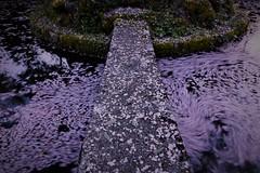 The End of Cherry Blossom Season _2053 (armada_rider_jp) Tags: spring flow petals 花びら 桜 slowshutter longexposure botanicals pond bridge pink