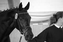 010 (feldweg) Tags: pferd freispringen freispringchampionat gerdeswalde 2017 horse caballo cheval kon hest cavallo