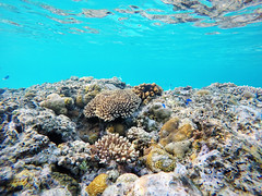Welcome to Philippines :) (Landersz) Tags: philippines filippine coron palawan club paradise snorkeling turtle shark clownfish nemo dugong landersz canon 5dmk3 nimar gopro hero5