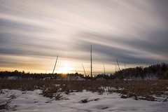 Silver and Gold (Matt Molloy) Tags: mattmolloy timelapse photography timestack photostack movement motion overcast sky sunset clouds trails lines winter snow cattails grass trees branches marsh highway15 elgin ontario canada landscape nature lovelife