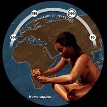 One Species: Homo Sapiens