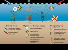 Phytoplankton bloom feedback loops (wicomicocreekwatchers) Tags: diagrams waterquality watercolumnstratification nutrientloadings runoff hurricanes lightpenetration seagrasses submergedaquaticvegetation sav sponge filter lowdissolvedoxygen sulfidetoxicity sediments tubidity nitrogen phosphorus