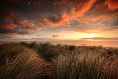 Dunes (Stu Patterson) Tags: stu patterson sunrise northumberland seaton sluice beach dunes