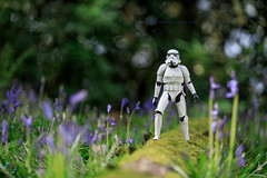 108/365 Bluebell Woods ([inFocus]) Tags: canon 70200mm 5d 5dmkiv dave 365 3652017 project365 starwars stormtrooper actionfigure action plastic blue bluebells rodehall cheshire woods flare