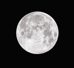 The Pink Moon. La Luna Rosa. Miami, April 2017. (pedro lastra) Tags: winner alt