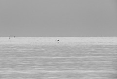 IMG_0009x (gzammarchi) Tags: italia paesaggio natura mare ravenna lidoadriano alba animale uccello volo bn poesia haiku