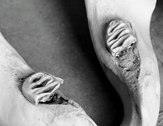 Elephant Mandible (Japhile) Tags: elefant elephant mandible unterkiefer bones knochen rostock zoologie zoology