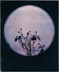 winter (somekeepsakes) Tags: 2017 colorfilmforsx70 roidweek2017 sx70 tip analog analogue blackframe film impossible instant polaroid roundframe schnee snow sofortbild theimpossibleproject winter