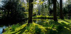 TEMPORARY RE-POST (howard1916 - Something for everyone!) Tags: water reflections baddesley clinton national trust daffodils springtime