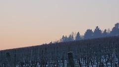 DSC02184 (ES_789) Tags: fellbach winter reif morgen