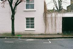Hadley Street (Gary Kinsman) Tags: canoneos30 canon35mmf2 london film grain fujisuperiaxtra800 800 iso800 nw1 architecture hadleystreet camdentown camden wall house tree garage