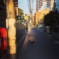 afternoon (moondrop) Tags: cat street light shadow wire afternoon tokyo