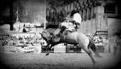 Viernes Santo... (Eduardo Amorim) Tags: horses horse southamerica caballo uruguay cheval caballos cavalos prado montevideo pferde cavalli cavallo cavalo gauchos pferd hest hevonen chevaux gaucho 馬 américadosul montevidéu häst uruguai gaúcho 말 amériquedusud лошадь gaúchos 马 sudamérica suramérica américadelsur סוס südamerika jineteada حصان άλογο americadelsud gineteada ม้า americameridionale semanacriolla semanacriolladelprado eduardoamorim semanacriolladelprado2011 ঘোড়া