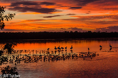 Ding Darling Sunset (Bill's 5 B's Plus) Tags: sunset nature dingdarlingnwr