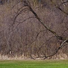 Trunk (David M Strom) Tags: park trees grass golf colorful minneapolis wirth theodore