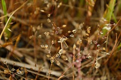 /The small warld (koludabone49) Tags: grass japan spring nikon  grasshopper    dropofwater   d5100