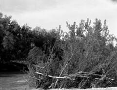 Primi scatti con il banco (Robarubata) Tags: trees blackandwhite nature analog river 150 4x5 100 rodinal bancoottico largeformat firstshot fomapan grandeformato esino