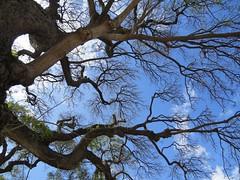 Trees Sky (macclicker2012) Tags: ocean trees sea sun mountains green canon hawaii dancers sony maui panasonic firedancers nex