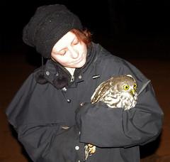 My First Barking Owl (Ninox connivens) (Sionnach Skye) Tags: australianbirds barkingowl