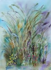 """Summertime grasses <a style=""""margin-left:10px; font-size:0.8em;"""" href=""""https://www.flickr.com/photos/66157425@N08/14115127074/"""" target=""""_blank"""">@flickr</a>"""