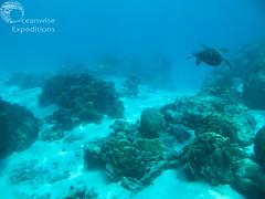 Oceanwise Expeditions 24-05-2014 070.jpg (Oceanwise Expeditions) Tags: ecology australia science research whales whaleshark biology ningaloo westernaustralia exmouth mantarays caperangenationalpark ningalooreef ecotours oceanwiseexpeditions