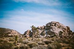 36 (naz hamid) Tags: california joshuatree twentyninepalms joshuatreenationalpark